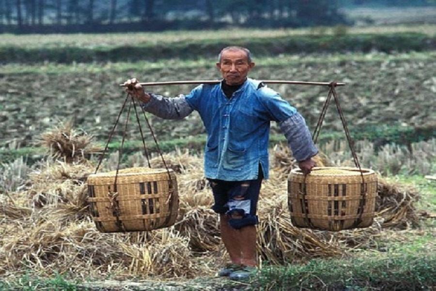 مزارعون صينيون يستفيدون من أحد مشاهير الإنترنت في مجال الزراعة