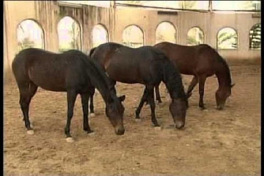 الطب البيطري ينظم زيارات ميدانية لمستشفى الخيول في مطروح