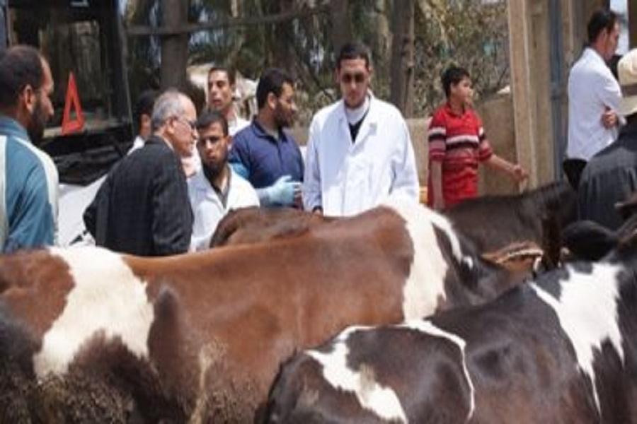 تنظيم قوافل بيطرية تنموية علاجية تجوب قرى الإسماعيلية خلال أغسطس الجارى