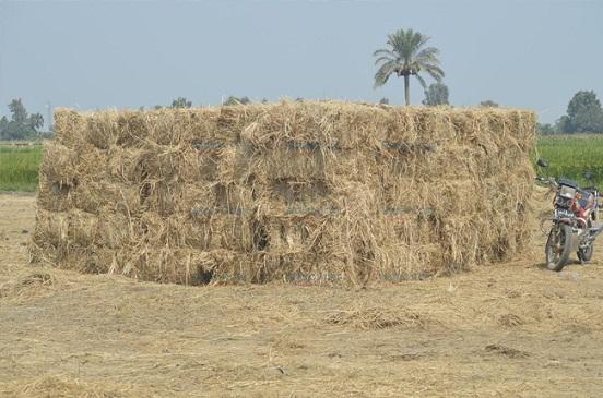 رئيس جهاز البيئة يعرض خطة الوزارة للتعامل مع قش الأرز.. وتفعيل البعد الاقتصادي