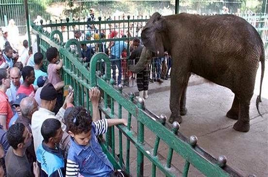 الزراعة تدرس زيادة سعر تذكرة حديقة حيوان الجيزة إلى 25 جنيها