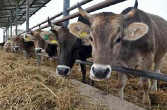 الرقابة على الواردات: استقبلنا 95 ألف طن لحوم ودواجن و13 ألف رأس ماشية حية