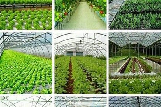 الوطنية للصحافة: الصوب الزراعية توفر الأمن الغذائي للبلاد.. فيديو