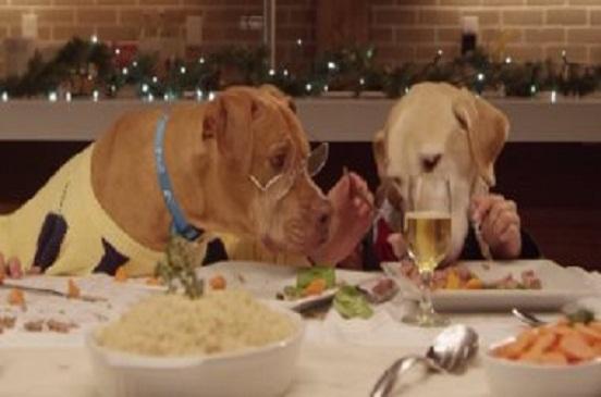 حتى الكلاب عندها السكر.. تعرف على أسبابه وهل تتشابه مع الإنسان