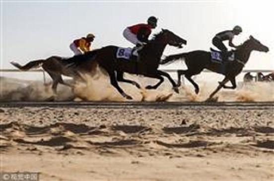 انطلاق سباق ليوا للخيول والجمال في العاصمة الإماراتية أبوظبي