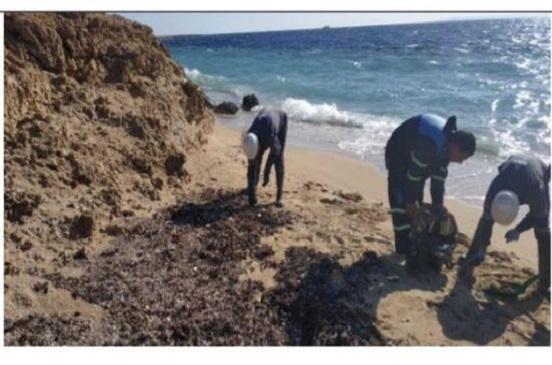 «البيئة» تواصل جهودها للقضاء على بقع تلوث زيتي بشاطئ محمية رأس محمد