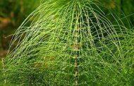 9 نباتات قادرة على قهر السرطان.. ومتخصصون: مشروعات متوقفة وتحتاج لتبنيها