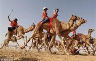 بدء مهرجان وسباق الشيخ زايد السنوي للجمال في الإمارات