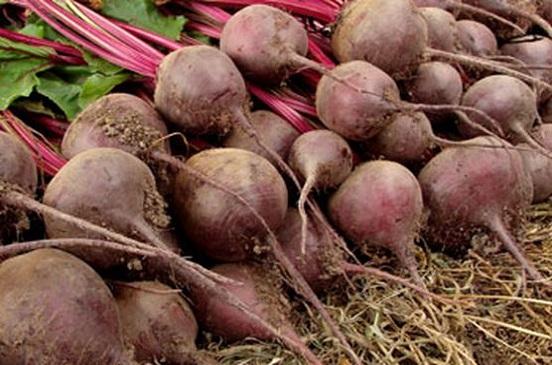 توصيات يجب اتباعها لزراع محصول البنجر
