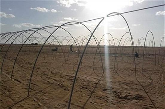إنشاء مجمع للصوب الزراعية على 125 فدانا بالوادي الجديد