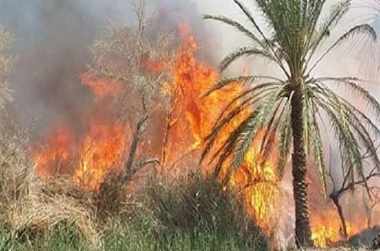 السيطرة على حريق نشب فى 25 نخلة ومخلفات زراعية بطوخ