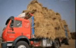 شاهد.. شاب مصرى يجمع ٧ آلاف طن من قش الأرز سنويا ويحولها إلي ذهب