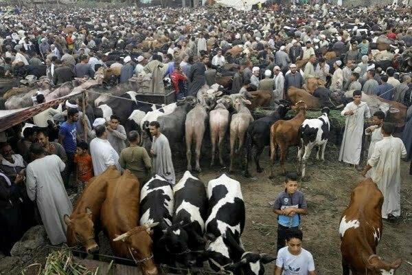 إغلاق سوق المواشي في مركز بدر