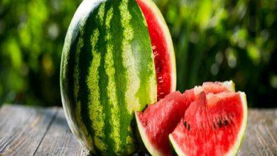 تعرف على أسباب زيادة حجم البطيخ