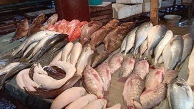أسعار الأسماك اليوم السبت 17 يوليو 2021